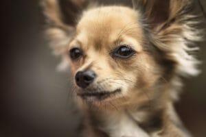 hundeversicherung_online:_balunos_hunde-op-kosten-versicherung