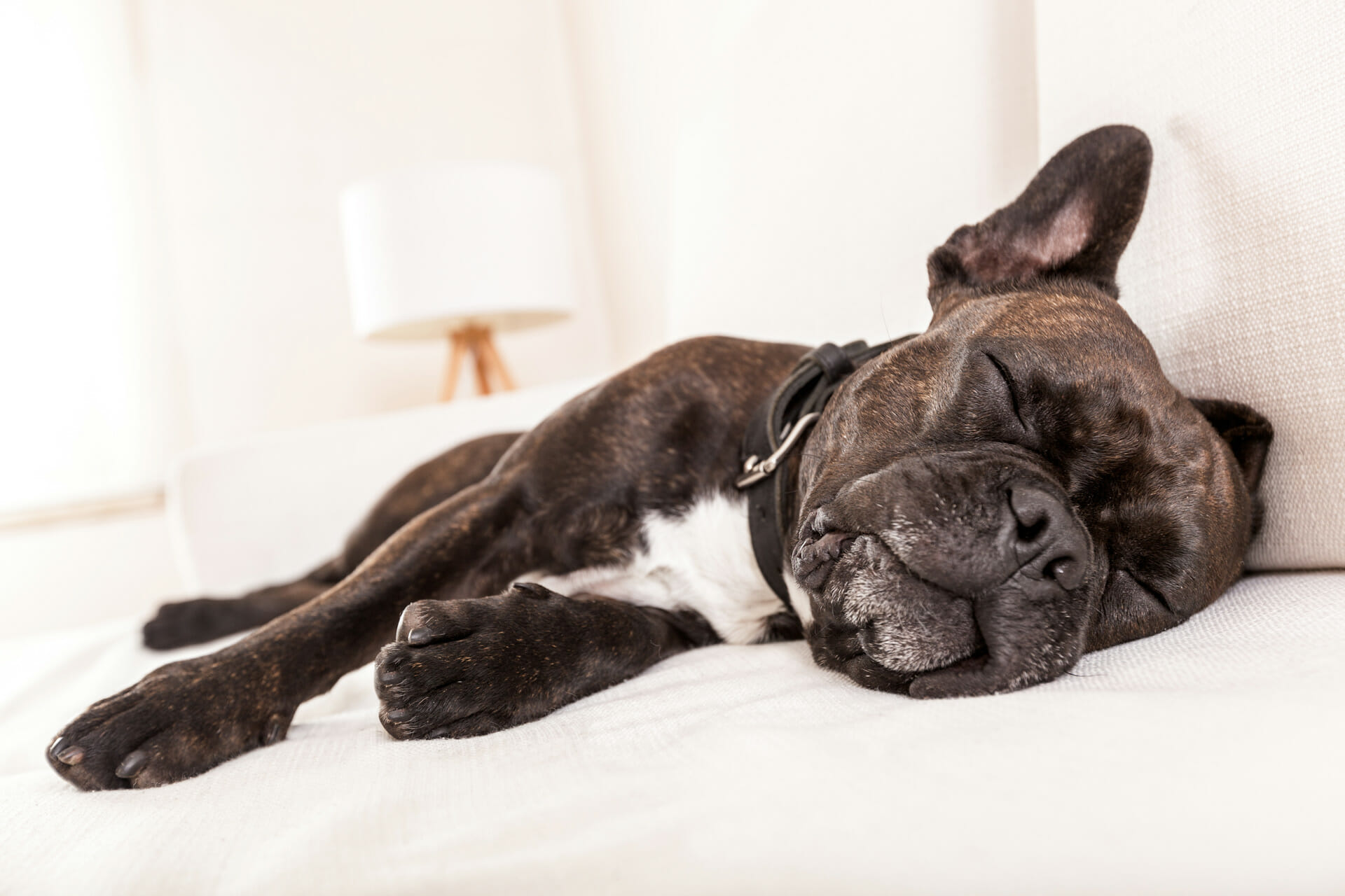 hund kreuzbandriss versicherung