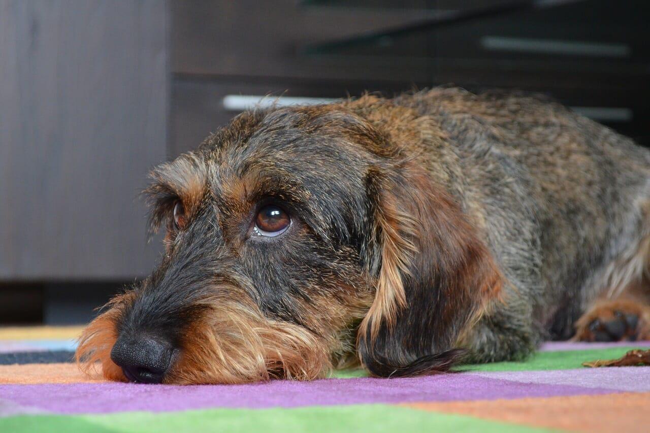 vergiftung hund versicherung, hundeunfallversicherung