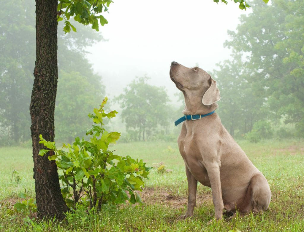 starkes_immunsystem_hundeversicherung