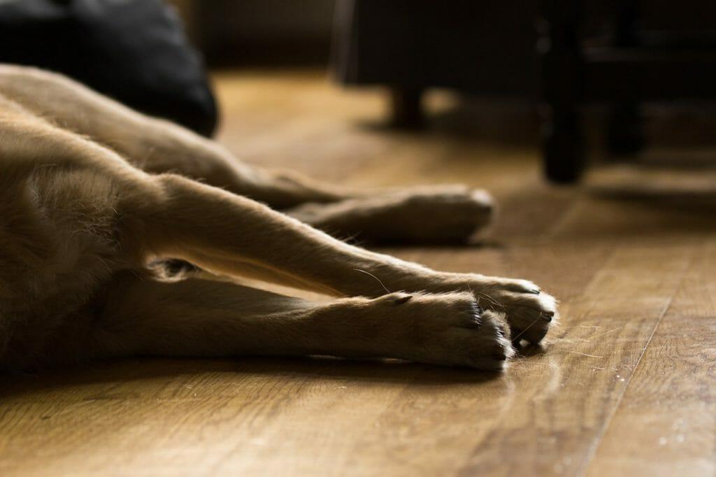hundekrankheiten, hundeversicherung balunos, hundekrankenversicherung