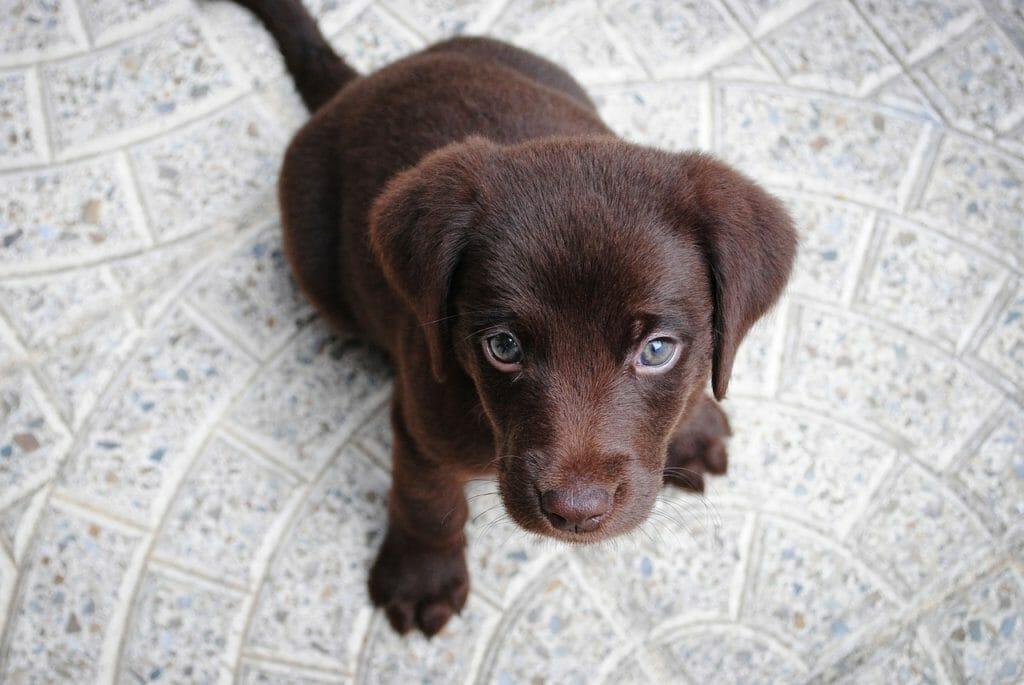 welpeneinzug hundeversicherung, welpeneinzug balunos