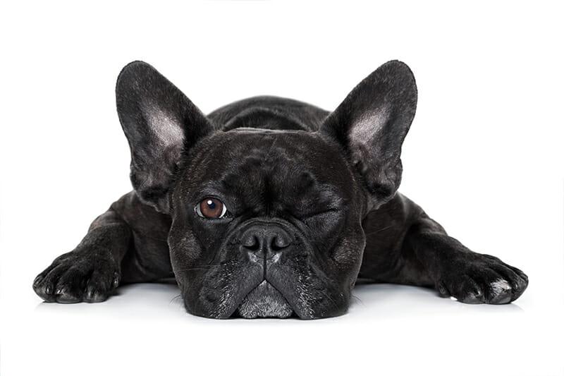 hundeunfallversicherung_balunos
