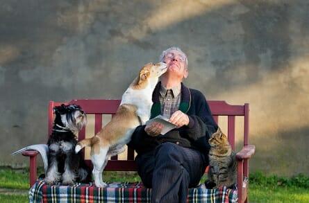 hundekrankenversicherung, hunde kranken versicherung
