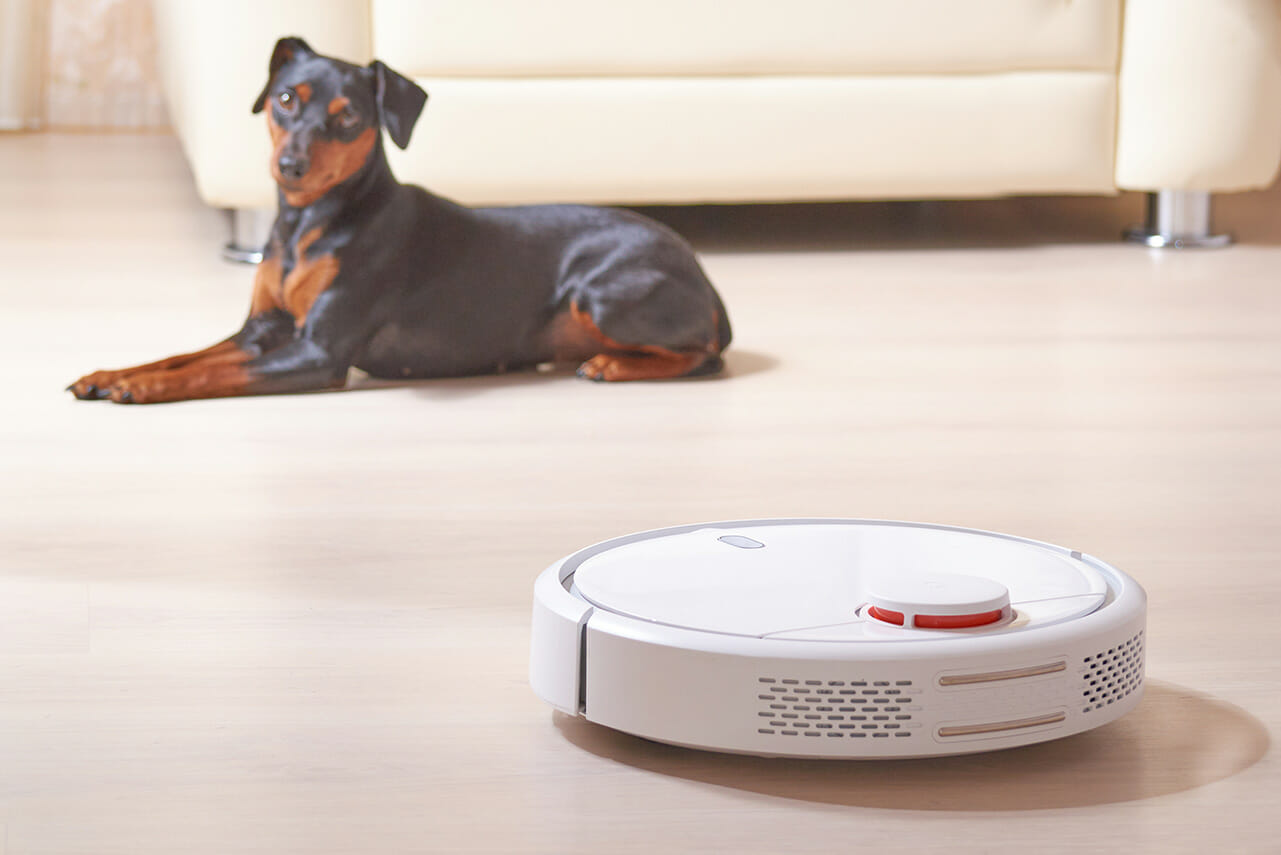 hundeversicherung online