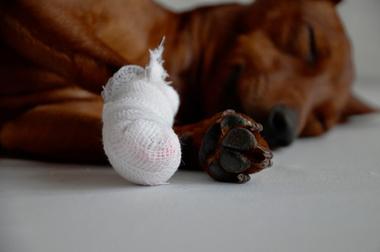 Balunos Hundeversicherung