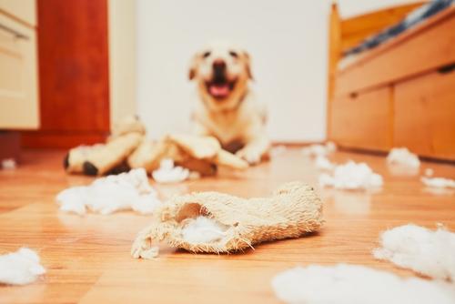 Balunos Hundehalterhaftpflicht Versicherung