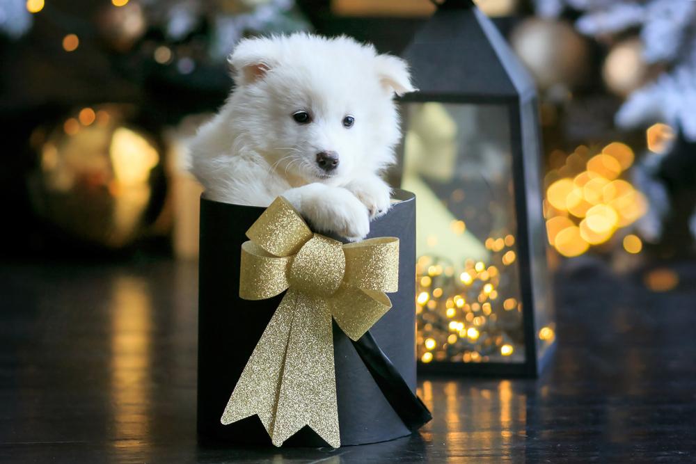 Hund zu Weihnachten schenken?